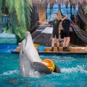 Дельфинарии, океанариумы Новочеркасска