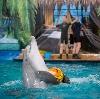 Дельфинарии, океанариумы в Новочеркасске