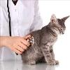 Ветеринарные клиники в Новочеркасске